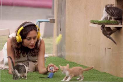В Лос-Анджелесе открылся антистресс-павильон с живыми котятами 0_e88de_29cf4751_orig