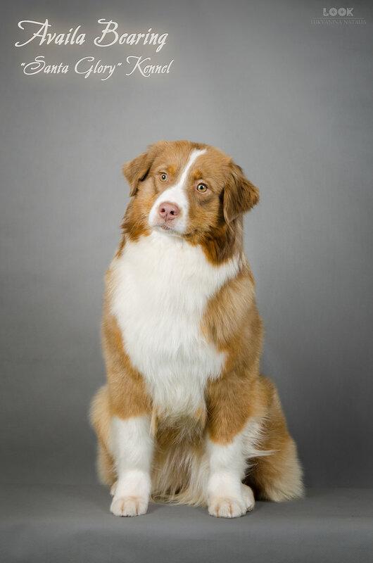 Мои собаки: Зена и Шива и их друзья весты - Страница 6 0_a75da_a2d3233f_XL