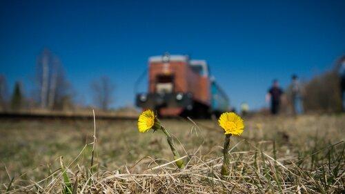 Поезд из Ромашково