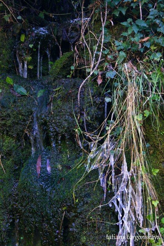 Возле лесного ручейка
