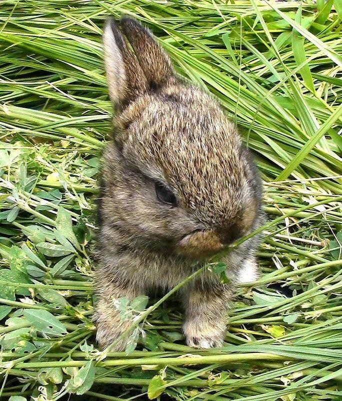Крольчонок
