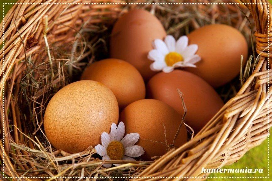 Яйца (полезные советы)