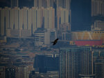 Bird over the city