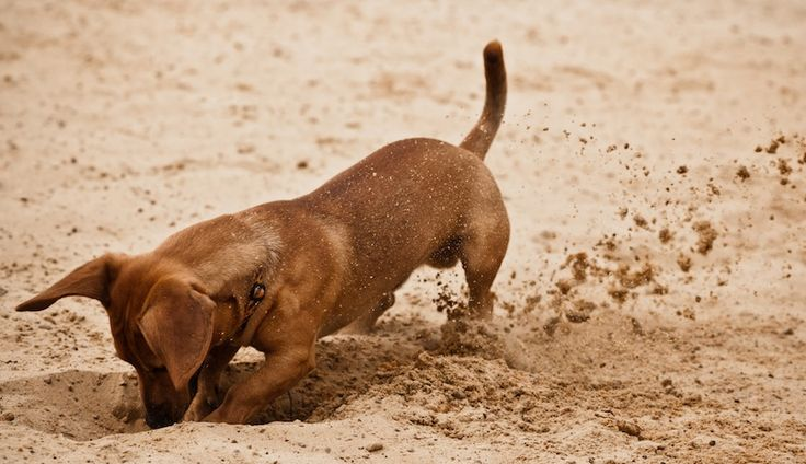 — Знаешь, почему собаки любят копать? — Потому что ищут кости. — Потому что ищут правду! Уилфред (Wilfred)