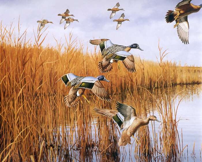Mallard duck paintings