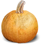 mzimm_fallintoautumn_pumpkin_sh.png