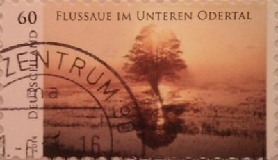 2014 пейзажи германии закатное дерево  60