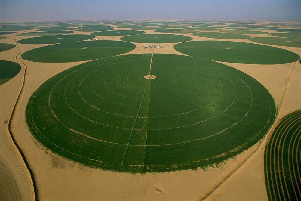 2. Руб-эль-Хали, Саудовская Аравия. Выращивание люцерны в качестве корма для животных на орошаемых з