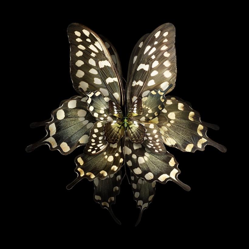 Имитация мимикрии. Цветы из крыльев бабочек (10 фото)