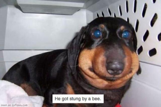 после встречи с пчелами
