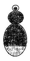 Bombus soroensis female