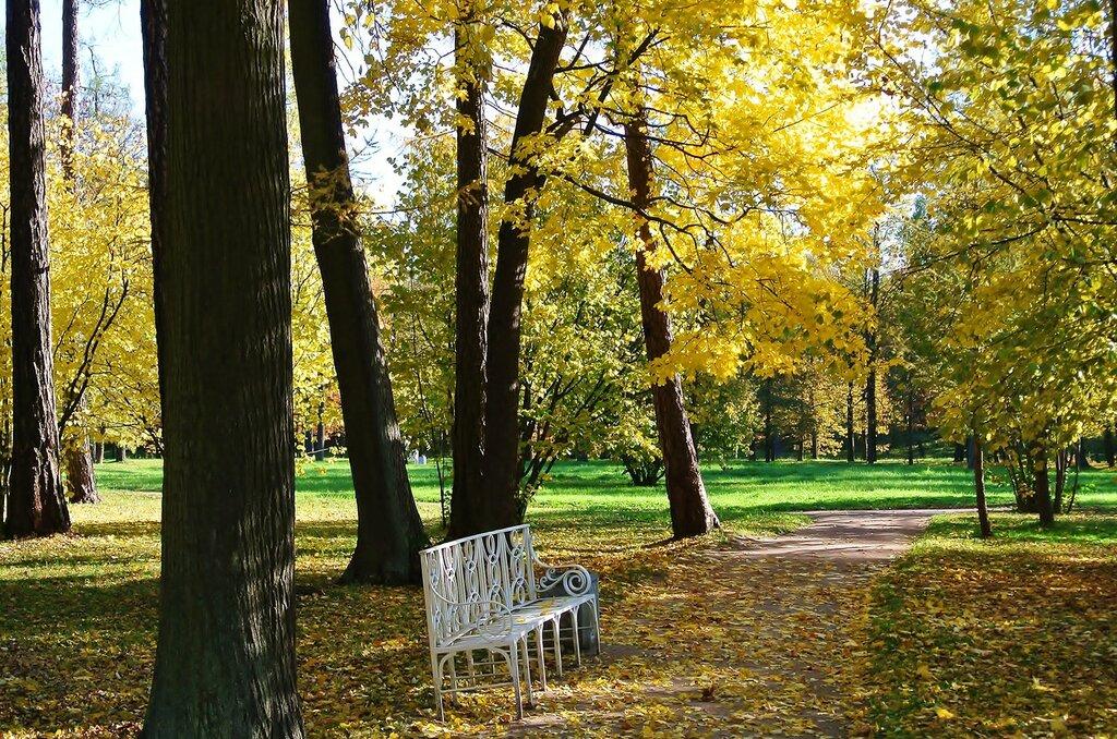 Грустная скамейка осеннего парка...