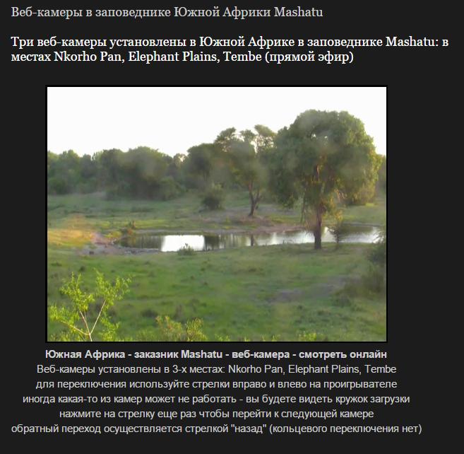 Веб-камеры в заповеднике Южной Африки