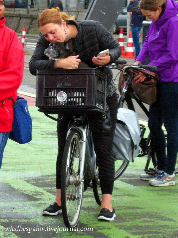 2015-06-23 Холодний Амстердам_(28).JPG