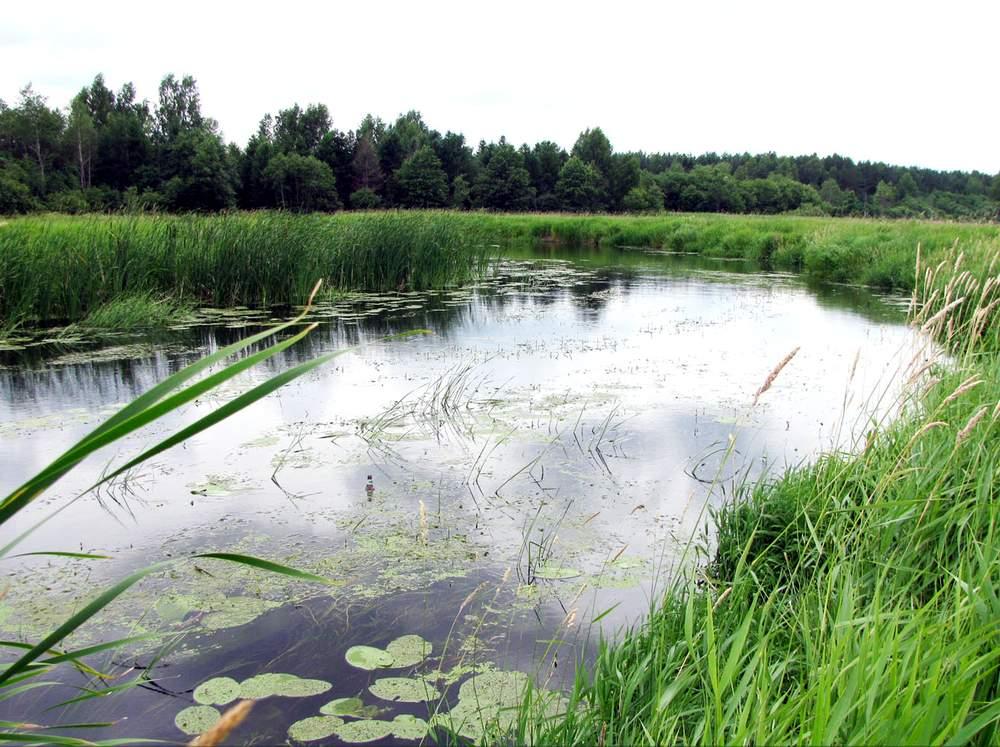 Река Вёкса, Нерль Волжская