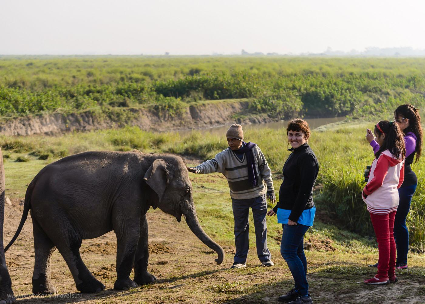 Снимок 19. Фотосессия в заповеднике. Отчеты о самостоятельном туре по Индии. 1/1000, -0.67, 4.5, 200, 70.