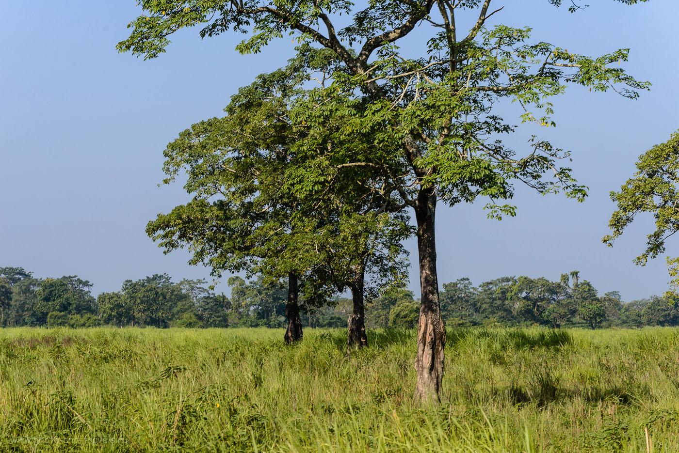 Фото 25. В заповеднике Казиранга слишком высокая трава. 1/400, -0.33, 9.0, 200, 116.