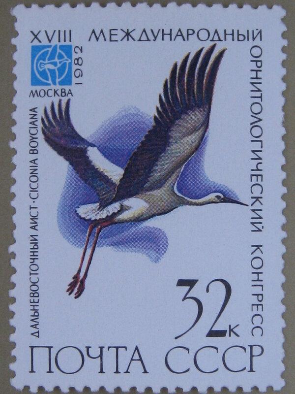 Дальневосточный аист (Ciconia boyciana).