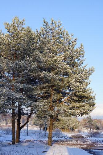 Снегопад 19 апреля 2015 г., Подмосковный лес