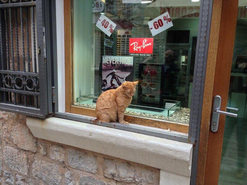 коты в Будве