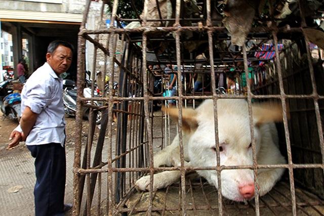 Китаянка не позволила съесть сотню собак на фестивале собачьего мяса
