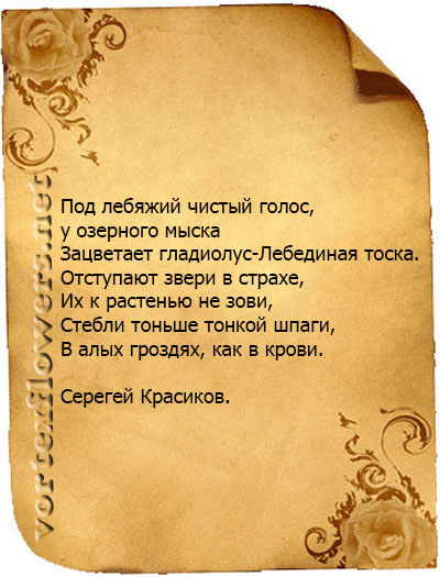 стихи о гладиолусе