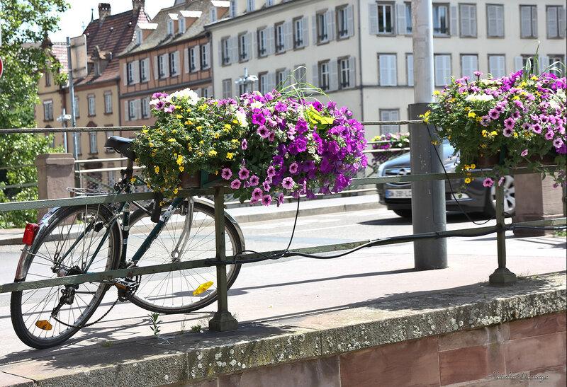 Летний Страсбург