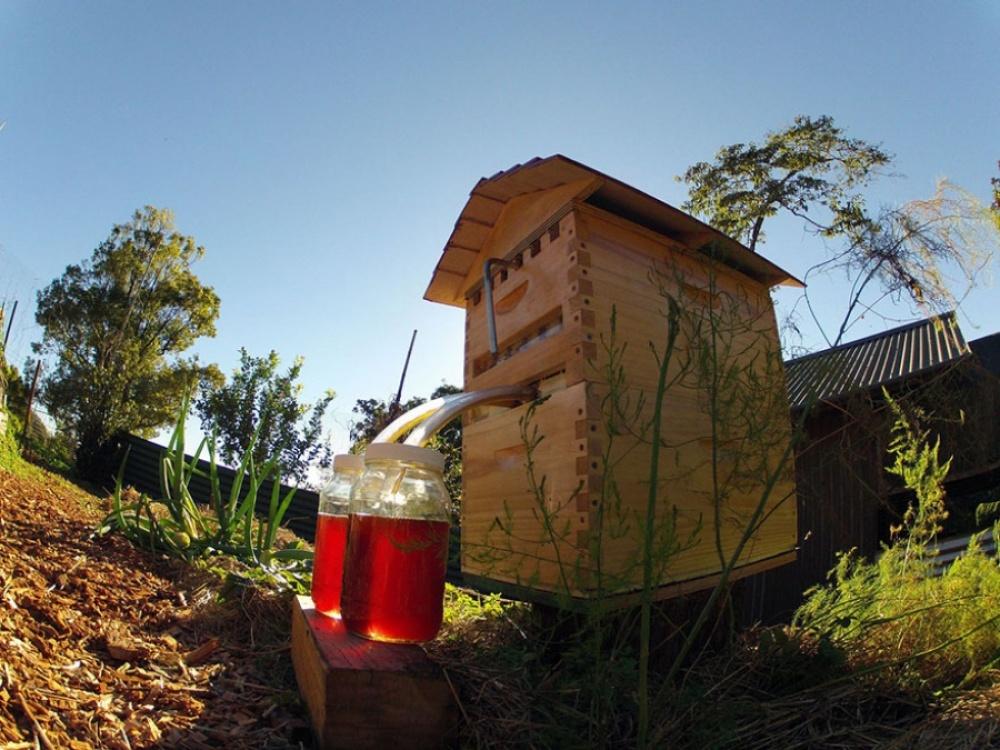 Пчелам отводится только часть стенок сотовых ячеек, которые они потом запечатывают воском. Когда сот
