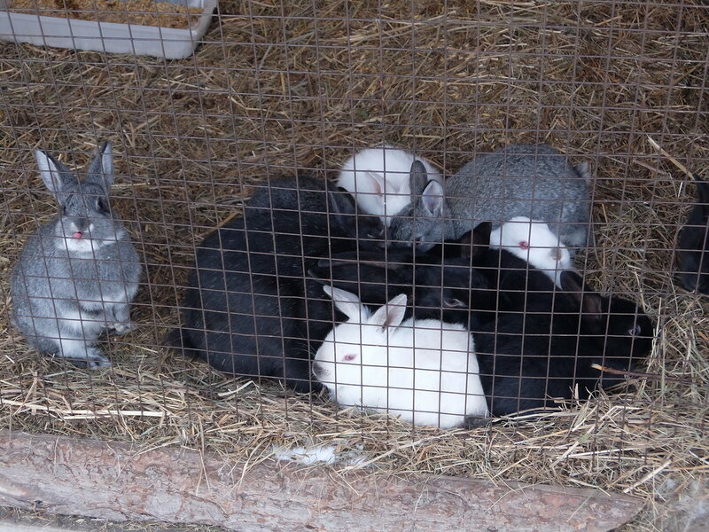 Абакан - Ландшафтный парк Сады мечты - Кролики