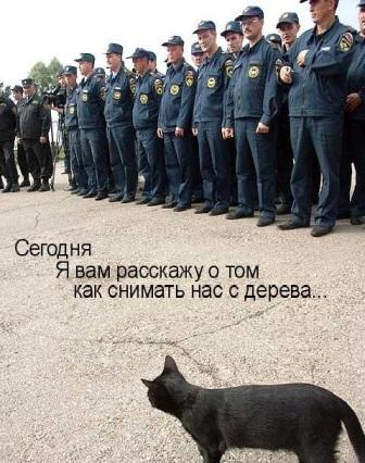 Кот испасатели: лекция.