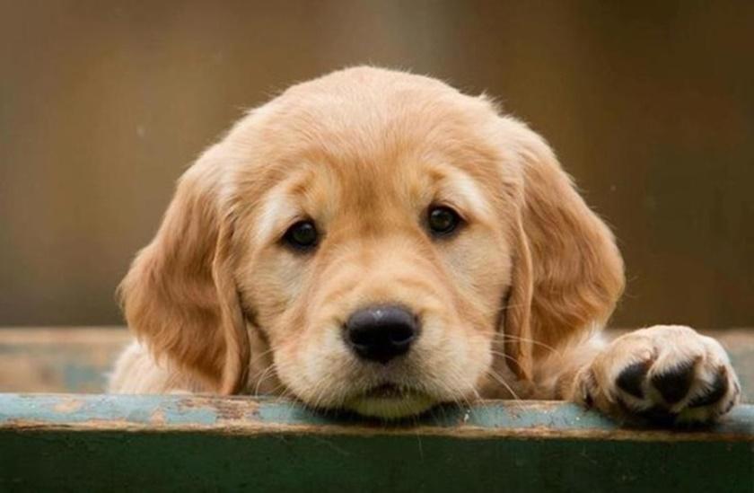 Как сделать квартиру безопасной для домашнего животного