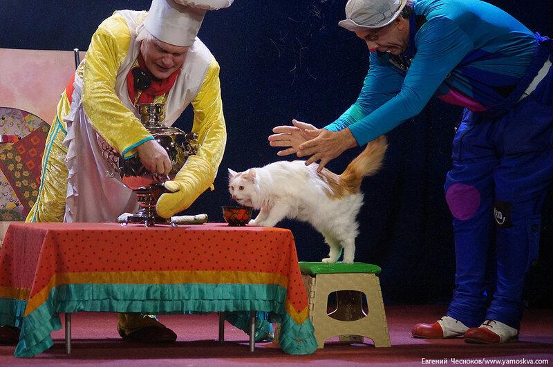 Осень. Театр кошек. ДИНАСТИЯ. 15.10.15.36..jpg