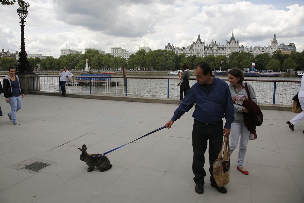 Пара вывела их кролика на Южный берег реки Темзы, Лондон. 21 июля 2012 года.
