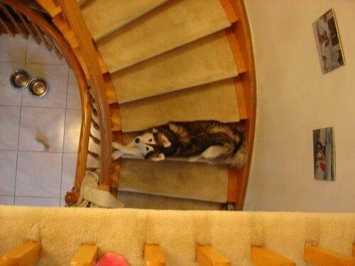 Собака, которую воспитали кошки