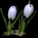 весенние цветы (22).png