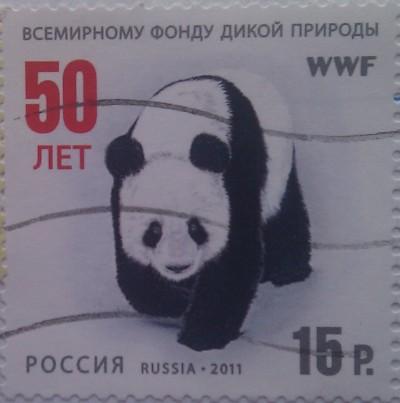 2011 панда 15