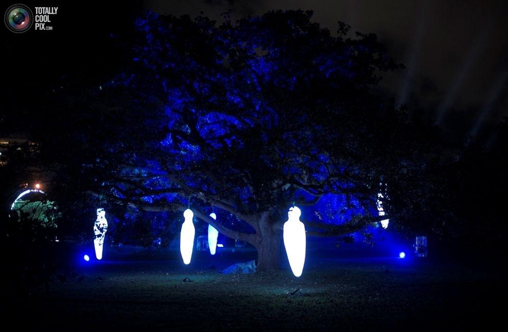 Светящиеся подвески на деревьях.