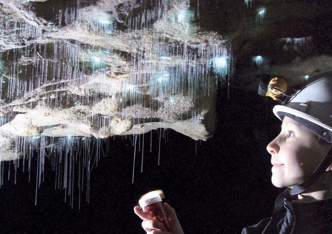4 Самым излюбленным местом среди туристов и посетителей считается пещера Glowworm или грот Светлячко
