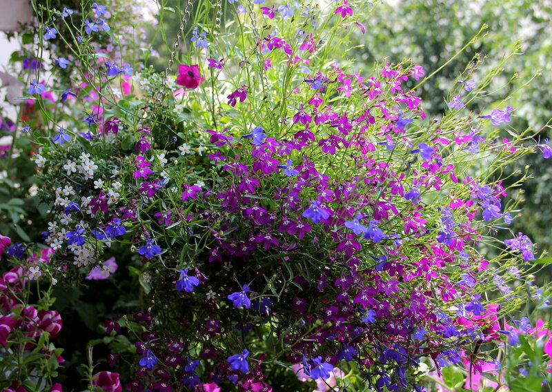 Цветы цветут цветущим утром...