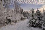 Зимние грезы