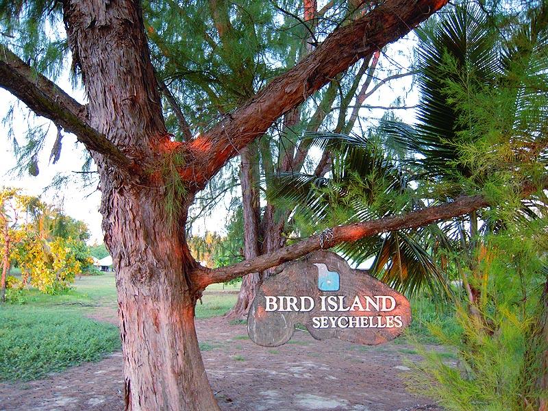 Добро пожаловать на Птичий остров