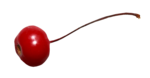 natali_design_xmas_berry.png