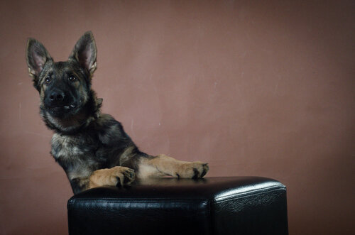 Родились щенки от Charly v. Rio Negro и Lola iz Peschanki - Страница 3 0_f41a4_74484d8c_L