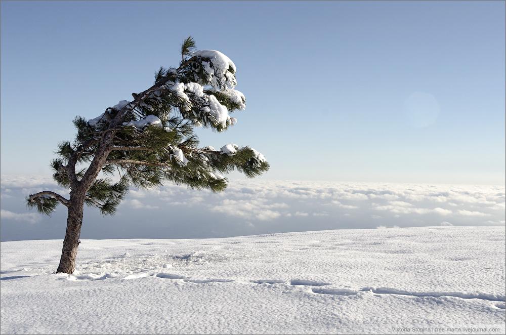 Снег на Ай-Петри. Зима 2015