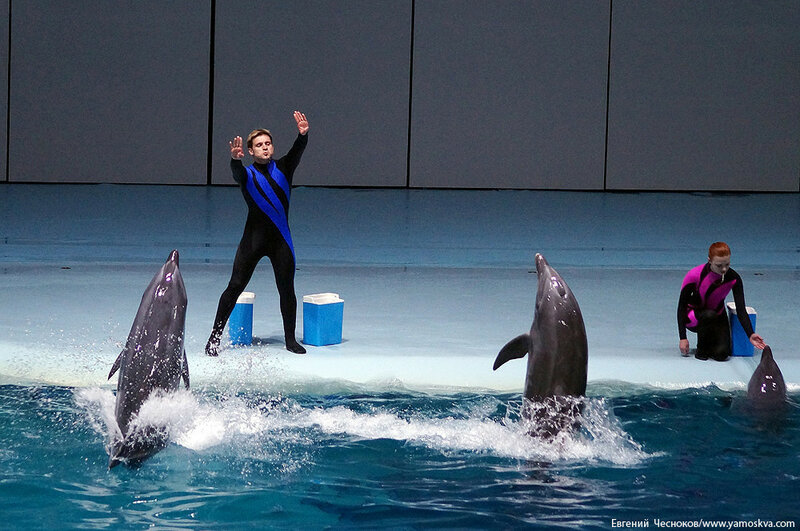Лето. ВДНХ. Москвариум. Дельфин. 14.08.15.02..jpg