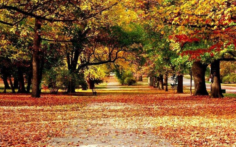 Стол на золотую осень