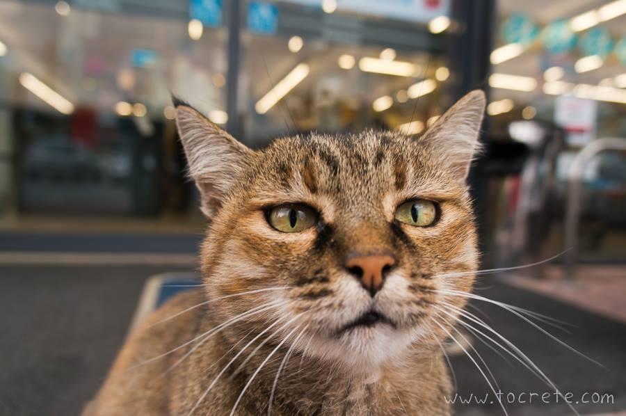 Любопытный критский кот