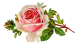 Free-Vintage-Rose-Clip-Art-By-FPTFY.png