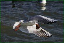 http://img-fotki.yandex.ru/get/16116/15842935.55/0_c6848_13230b92_orig.jpg