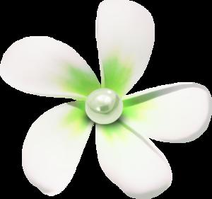 морские цветочки